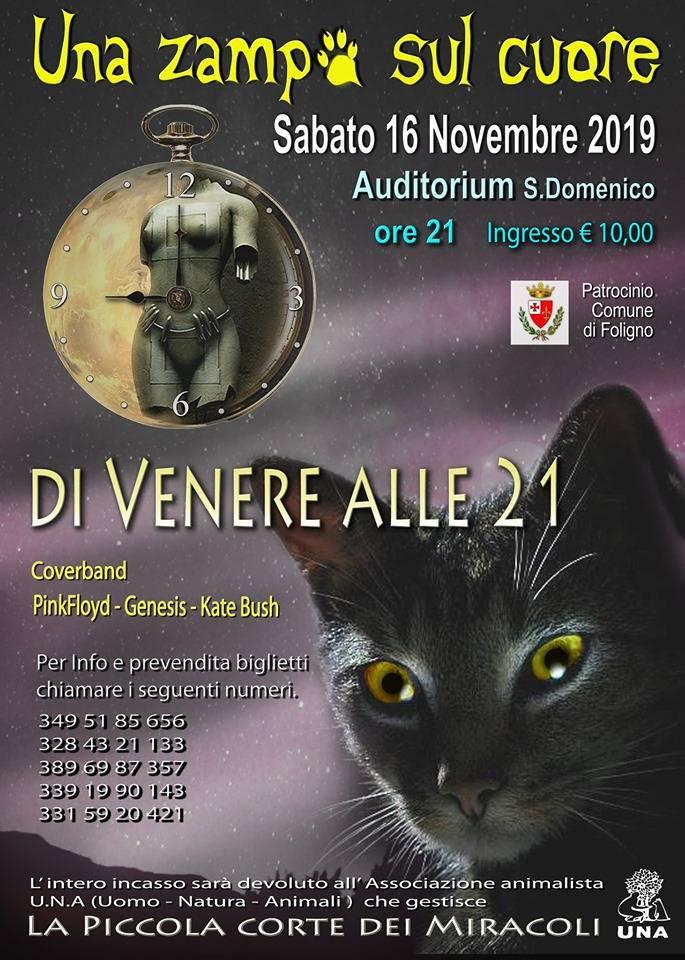 Una Zampa sul Cuore, evento di beneficenza per Oasi Felina