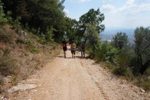 trekking tra gli ulivi